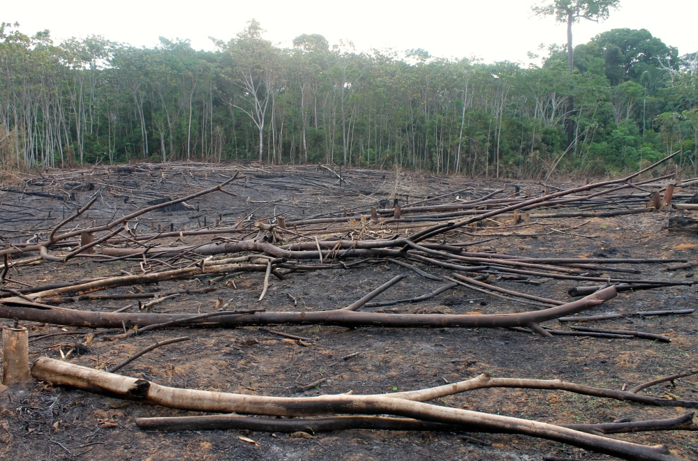 A deforestation site cleared for agriculture, 5 km from Puerto Maldonado. (photo: Alex Pashley)